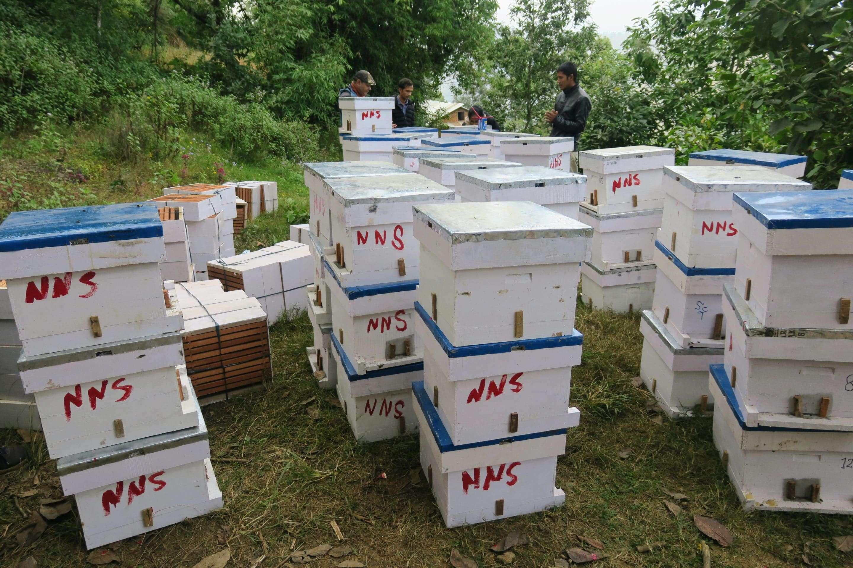 Bee farming workshop