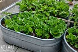 Advice on container gardens